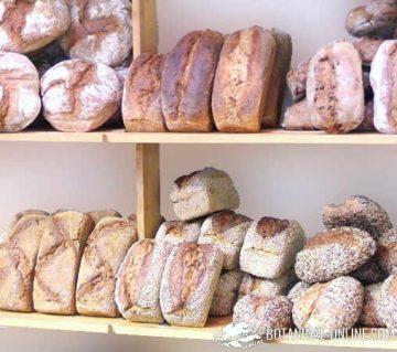 tipos de panes integrales en una panaderia