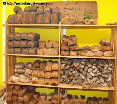 Tipos diferentes de pan
