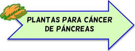 plantas medicinales para cancer de pancreas