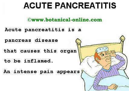 Natural Treatment Pancreatitis Dogs