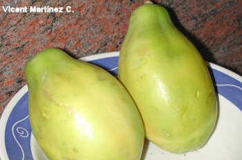 Papaya's fruits
