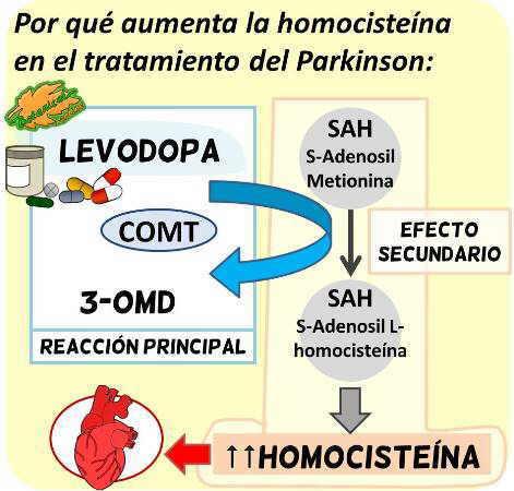 levodopa dopamina degradacion comt