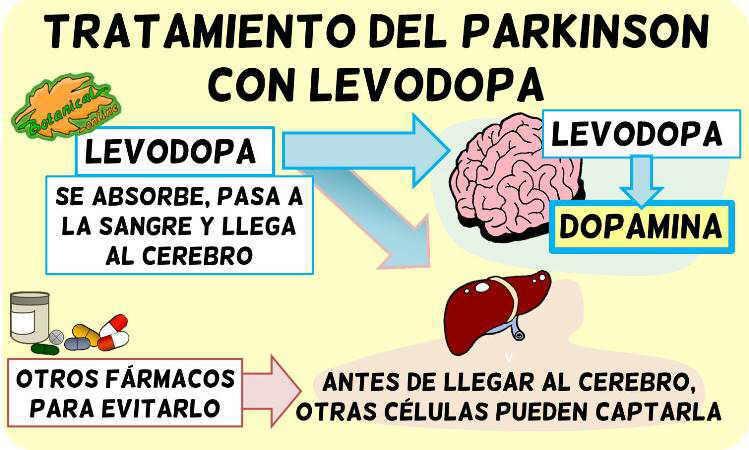 levodopa tratamiento parkinson metabolismo