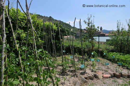 jardin gombren