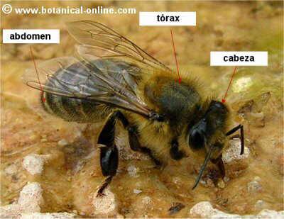Caractersticas de los insectos