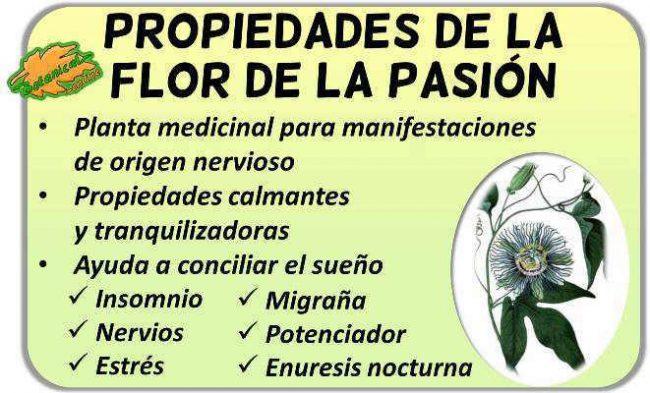 propiedades y beneficios de la flor de la pasion propiedades, planta medicinal