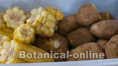 patatas y elotes ricos en hidratos de carbono