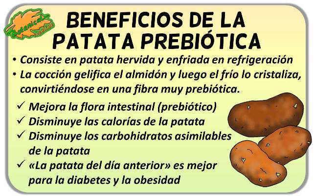 propiedades patata prebiotica beneficios