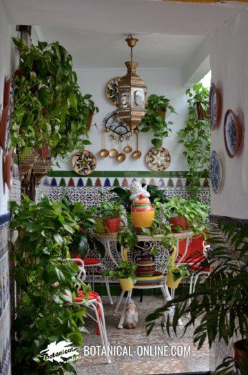Galeria porticada con plantas
