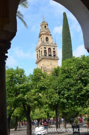Patio de los Naranjos en la Mezquita de Cordoba, con la Torre al fondo.