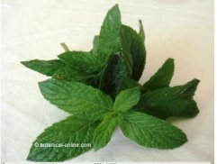 peppermint leaf
