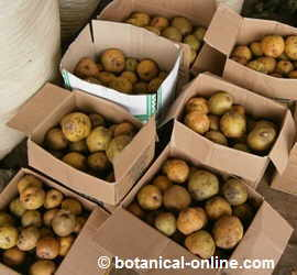 cajas de peras en un mercado