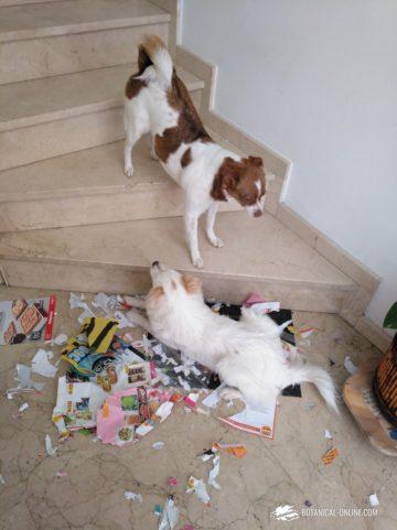 Perro destructivo