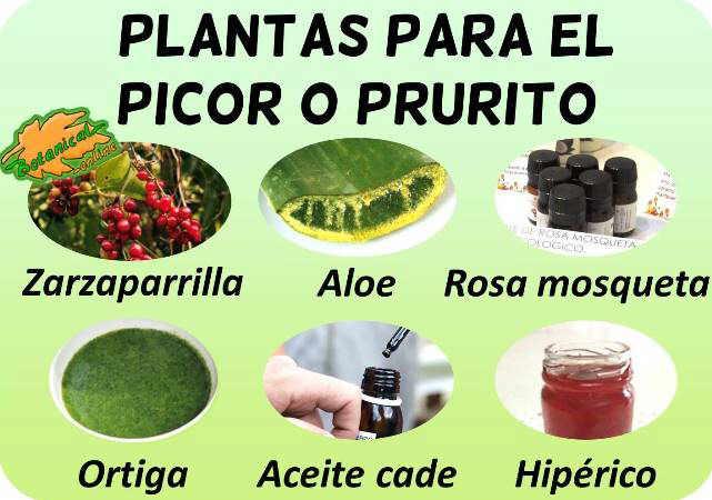 remedios naturales plantas para picor prurito