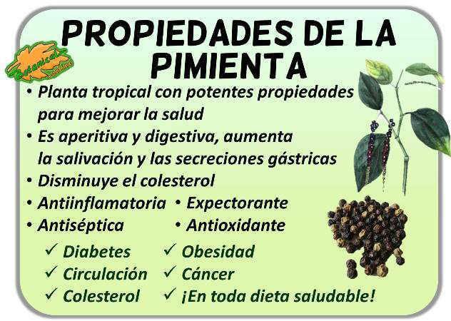 propiedades medicinales de la pimienta negra verde blanca piper nigrum