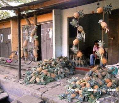 Mercado de piña