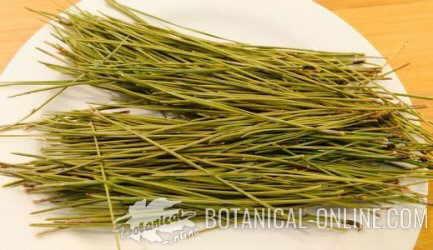 receta con hojas de pino comestible