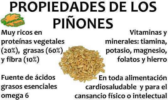 propiedades de los piñones de pino