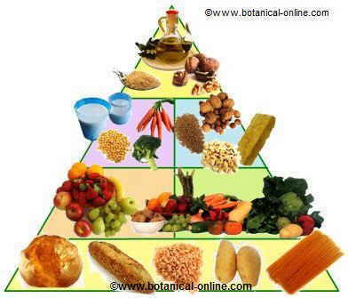 piramide de vegetarianismo