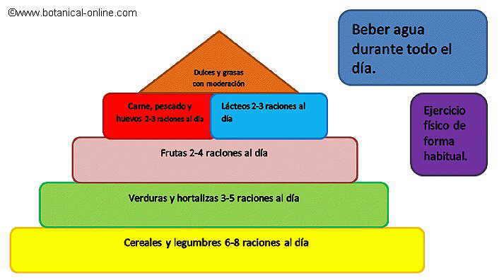 Nutricion Para Ninos de Piramide Nutricional Para
