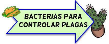 control plagas con bacterias