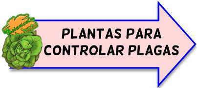 plantas antiplagas