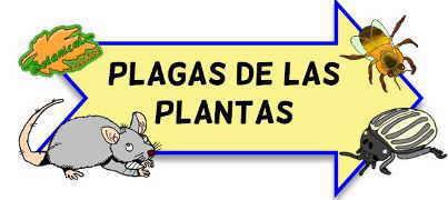 plagas de las plantas