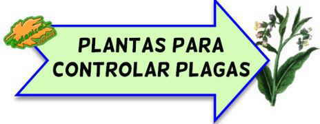 plantas controlar plagas