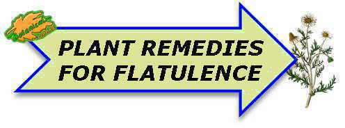 Plant remedies for flatulence