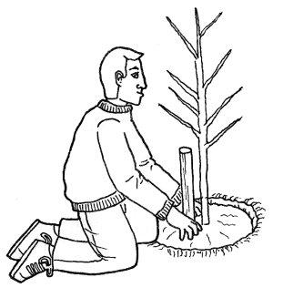 C mo plantar rboles frutales - Como cuidar los arboles frutales ...