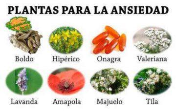 plantas para el tratamiento natural de la ansiedad