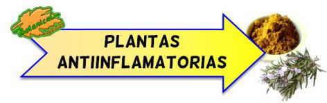 plantas antiinflamatorias