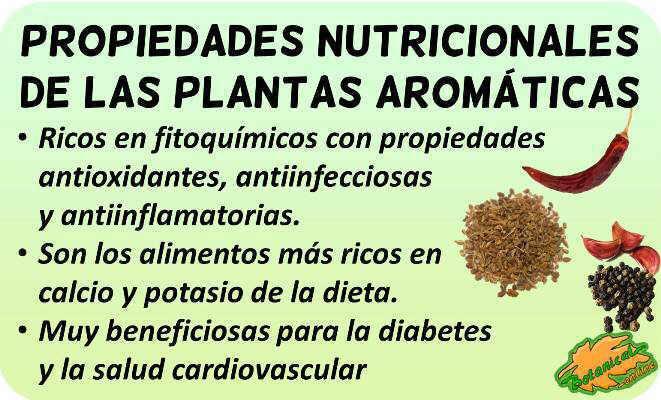 hierbas aromaticas especias propiedades nutricionales vitaminas minerales valor