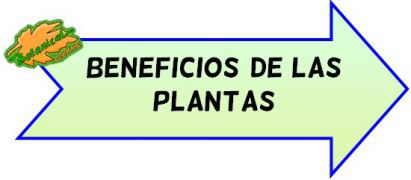beneficios plantas