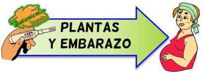 plantas y embarazo