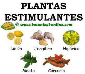 plantas estimulantes naturales