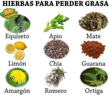 hierbas o plantas medicinales para adelgazar y perder grasa