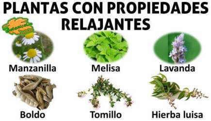 plantas para infusiones relajantes para el estres