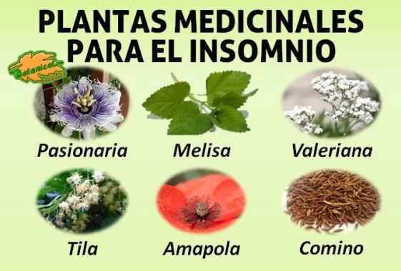 plantas medicinales remedios caseros medicina natural