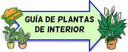 guia de plantas de interior