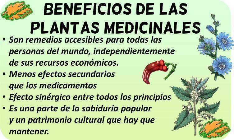 fitoterapia beneficios plantas medicinales y sus propiedades