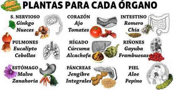 Plantas Medicinales Con Sus Nombres Y Dibujos Picture