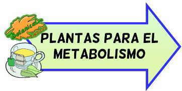 plantas para el metabolismo