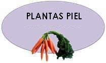 lista plantas piel