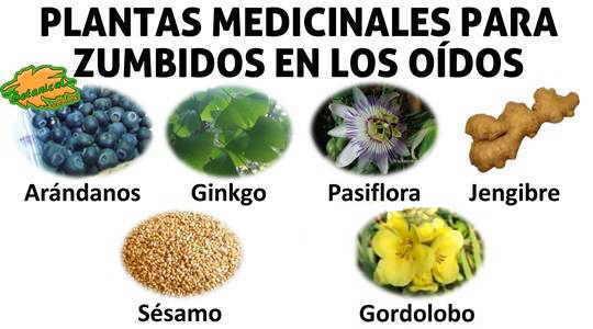 Remedios para el tinnitus for Tipos de hierbas medicinales