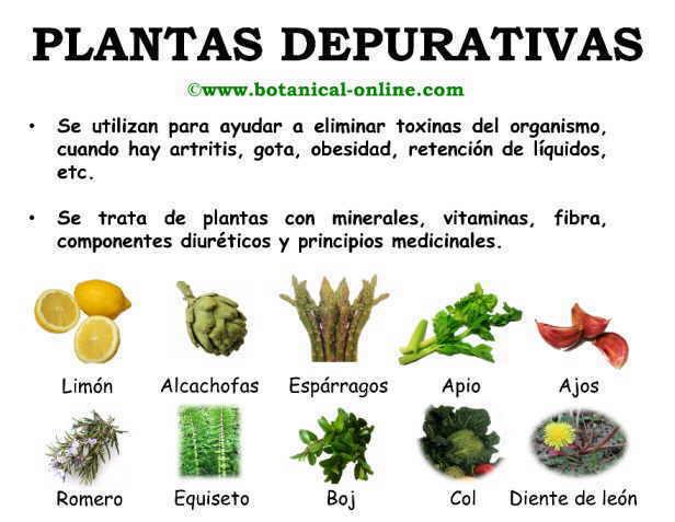 Plantas depurativas for Tipos de hierbas medicinales
