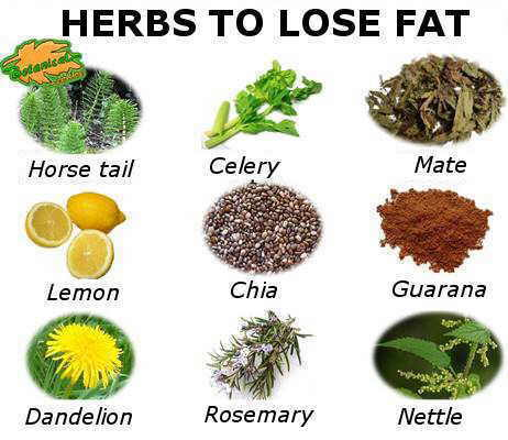 Medicinal plants to treat obesity