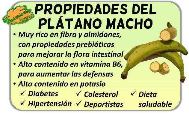Propiedades del plátano macho o verde