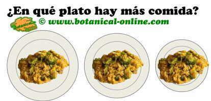efecto visual del tamaño del plato de comida para adelgazar