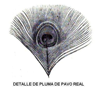 Características del pavo real